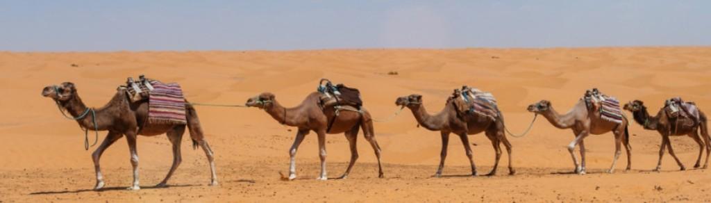 À partir de 15€ par jour Location de voiture Aéroport international de Djerba-Zarzisoport